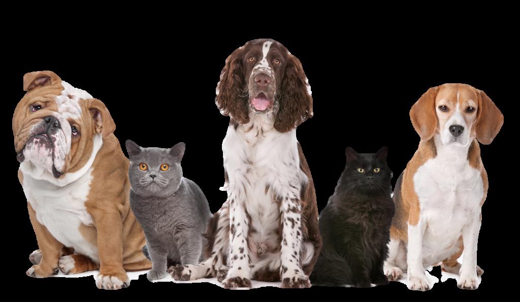 Dog-PNG-Transparent-Image
